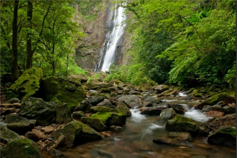 Campanha do Grupo Boticário contra desmatamento atinge mais de dois milhões de pessoas em poucas horas