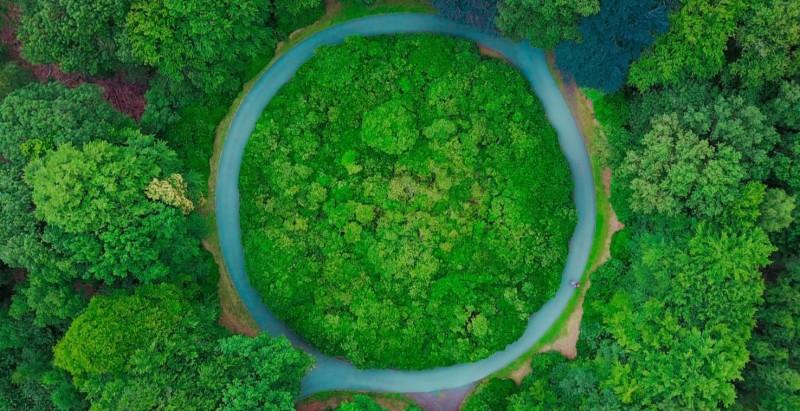 Indústrias de fragrâncias e aromas lançam carta de compromiso com um futuro mais sustentável